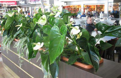 צמחייה הידרופונית בבתים ובמשרדים